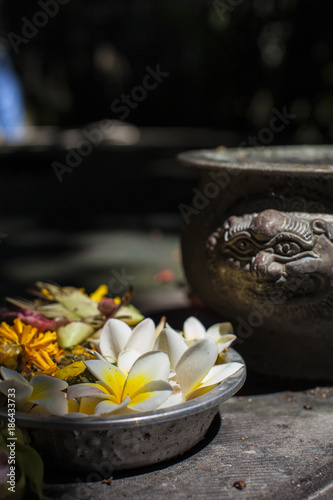 Fotobehang Bali Frangipani offer