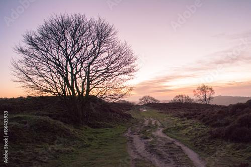 Fotobehang Lichtroze Sunrise on Stanton Moor
