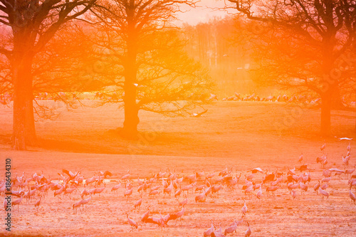 Poster Oranje eclat Sunrise back light at the field with cranes