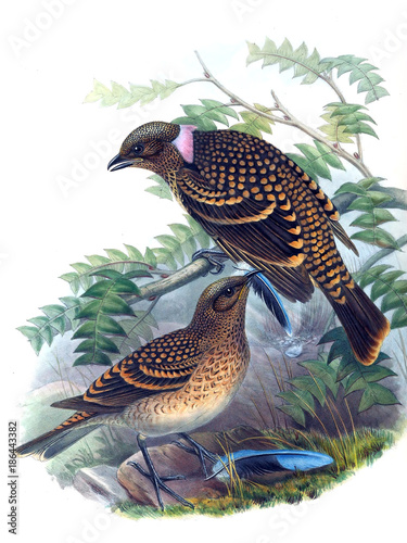 Illustration of bird - 186443382
