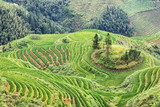 Terraced rice fields in rural China. - 186445705