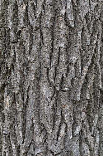 Foto op Plexiglas Brandhout textuur Wooden texture. Bark of tree. Background