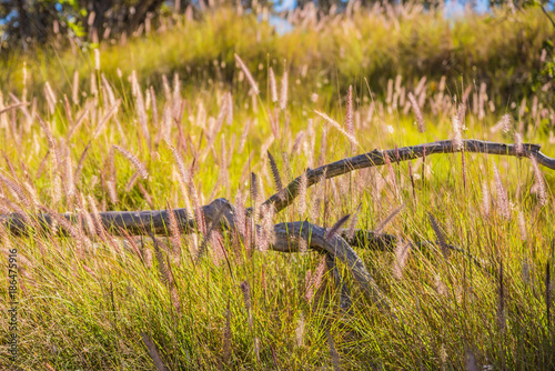 Foto op Plexiglas Honing Crooked Branch in a Field