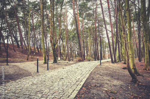 Foto Murales Park path with leafless trees, color toned picture.