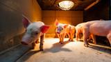 świnka wygrzewająca się w stodole - 186497550