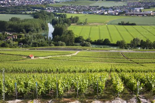 Vineyard Vineyards - Hautvillers near Reims - France