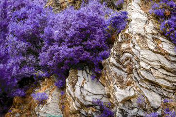 Trendy color concept of the year. Ultra violet color leaves and flowers and on the rocks of the mountain