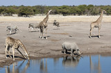 African wildlife at a waterhole in Namibia poster
