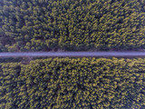 Aerial view over European pine tree forest with a road going through it. - 186511973
