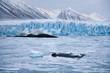 Monaco Glacier - Svalbard Islands (Spitsbergen)