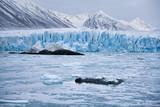 Monaco Glacier - Svalbard Islands (Spitsbergen) poster