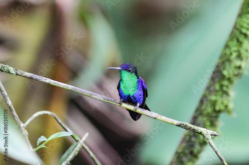 Plexiglas Eagle Landschaft und Tieraufnahmen in Costarica