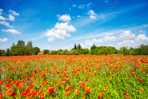 Foto op Canvas Klaprozen Poppy meadow with the blue sky
