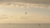 Hang-gliding over the Black sea, Georgia - 186541941