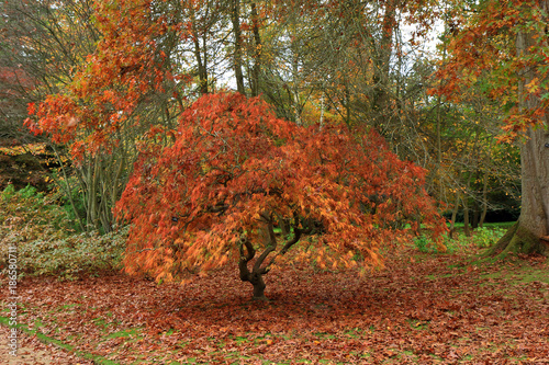 Staande foto Herfst The beautiful Autumn colours of a woodland scene