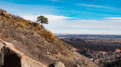 Foto op Canvas Zen One tree on a mountain side