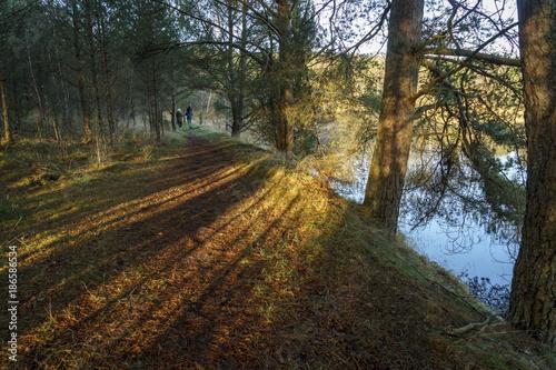 Foto op Plexiglas Weg in bos Leśna ścieżka oświetlona promieniami słonecznymi, po której spaceruję para z dzieckiem