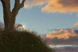 Hügel mit Baum und Glaskugel im Abendlicht. 3D Rendering - 186593332