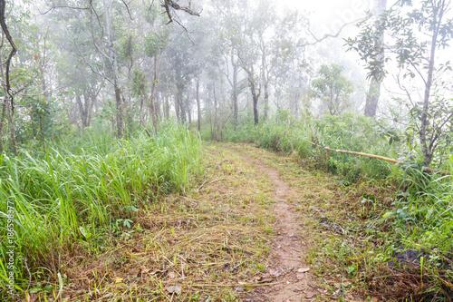 Foto op Plexiglas Weg in bos Path in the forest.