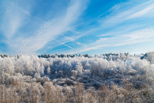 Foto Murales Frosty Trees in the Forest under Blue Sky with Trail of the Plane