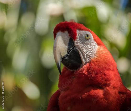 Aluminium Papegaai parrot close up profile