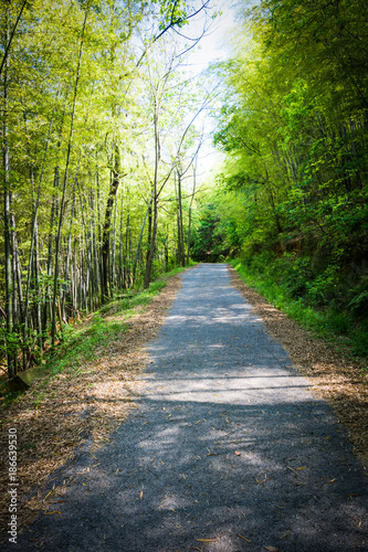 Tunnel bamboo trees and walkway, Banna district, Nakhonnayok province in Thailand. - 186639530