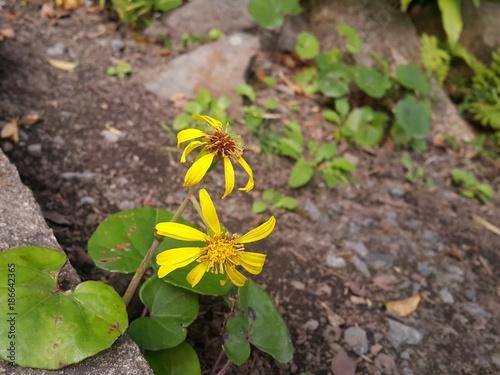 Foto Murales 노란 꽃