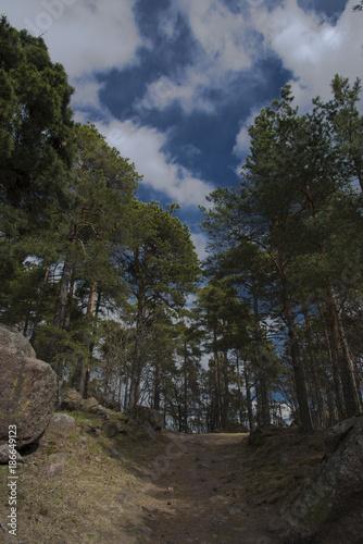 Foto op Plexiglas Weg in bos Chemin à Kotka, vallée de la Kymi, Finlande