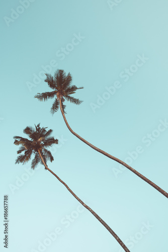 Fotobehang Lichtblauw Two coconut palm trees hanging over sky background vintage color toned
