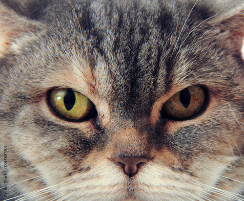 Aluminium Kat british cat face