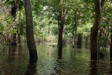 Panorama from Amazon rainforest, Brazilian wetland region.