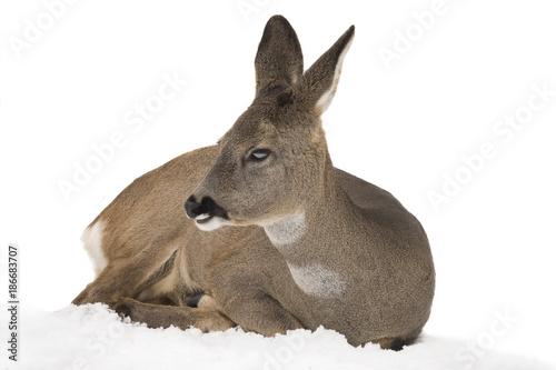 Aluminium Hert deer