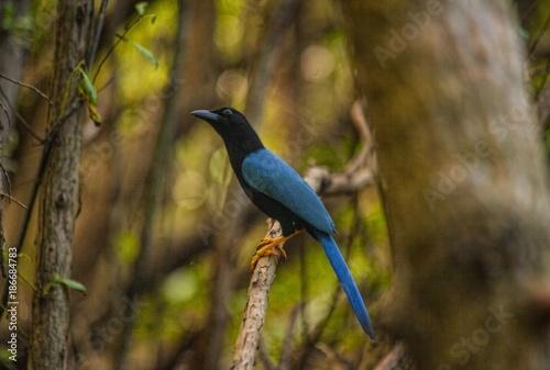 Foto op Canvas Natuur bird