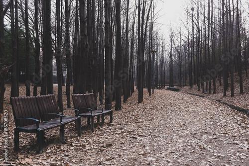 Deurstickers Seoel 서울 숲 공원의 분위기 있는 쉼터