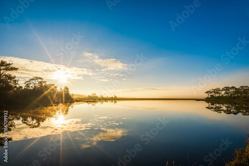 Aluminium Thailand Fog rises over Marsh Lake at sunrise in Pine forest