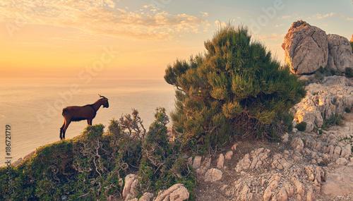 Foto auf Acrylglas See sonnenuntergang romantischer Abend an Mallorcas Küste