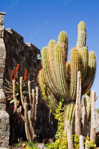 Fotobehang Canarische Eilanden Cacti Green spring landscape on Canary Islands