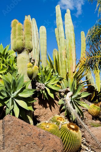 Foto op Canvas Canarische Eilanden Cacti Green spring landscape on Canary Islands