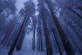 Baumkronen in einer winterlichen Nacht - 186747341