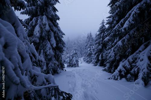 Foto op Plexiglas Weg in bos Trampelpfad durch verschneite Wälder