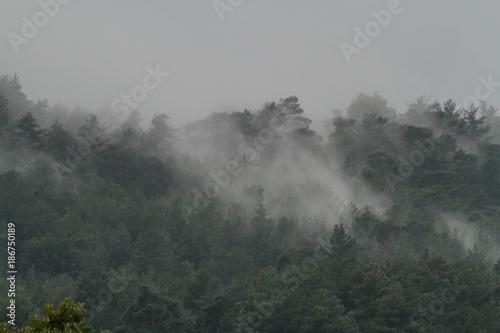Poster Donkergrijs Wald im Nebel