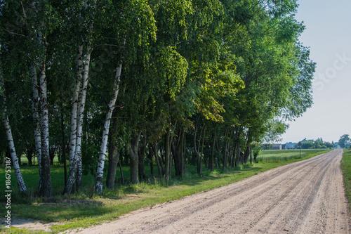 Foto op Plexiglas Weg in bos Krajobraz
