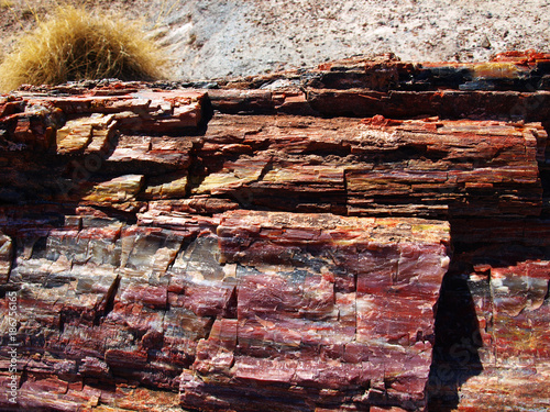 Poster Arizona Petrified Log in the Petrified Forest in Arizona, USA