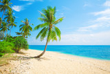 tropical beach with coconut palm - 186757720