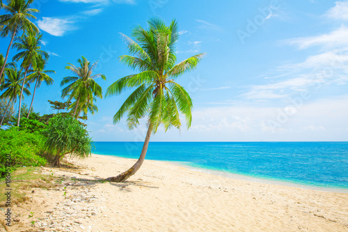 Fotobehang Tropical strand tropical beach with coconut palm
