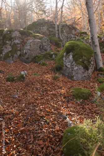 Staande foto Diepbruine forest in autumn, in monte moncayo in zaragoza spain