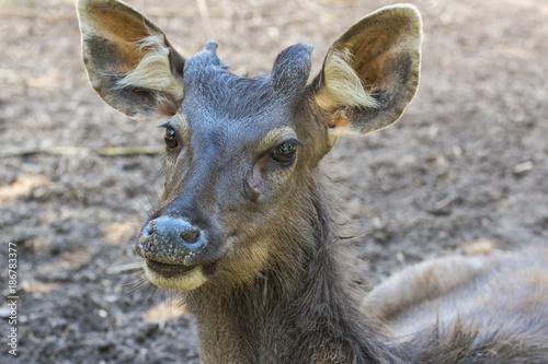 Aluminium Hert Close up deer head