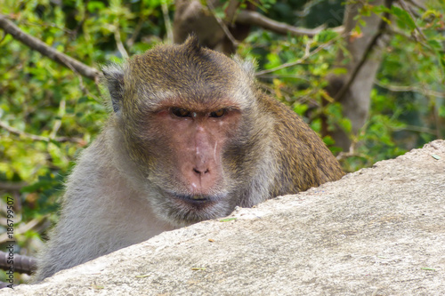 Fotobehang Aap Close up of an angry looking monkey