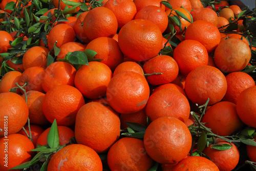 Foto Murales Fresh red tangerines with leaves in harvest season