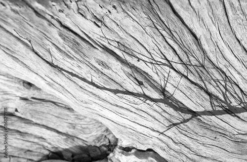 reflets de branche sur vieille souche - 186820918